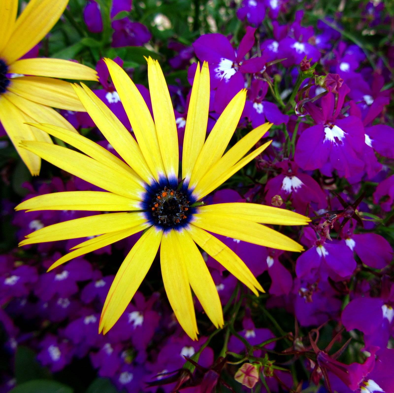 Seasonal Flower Guide For The July Wedding Sylvie